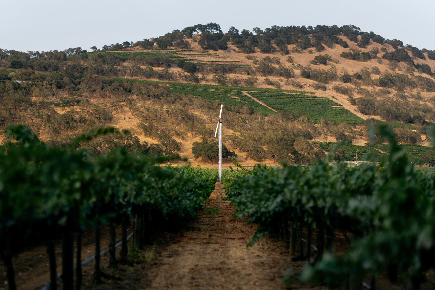 View of a wind fan in Trailside Vineyard